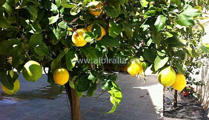 fruktrær